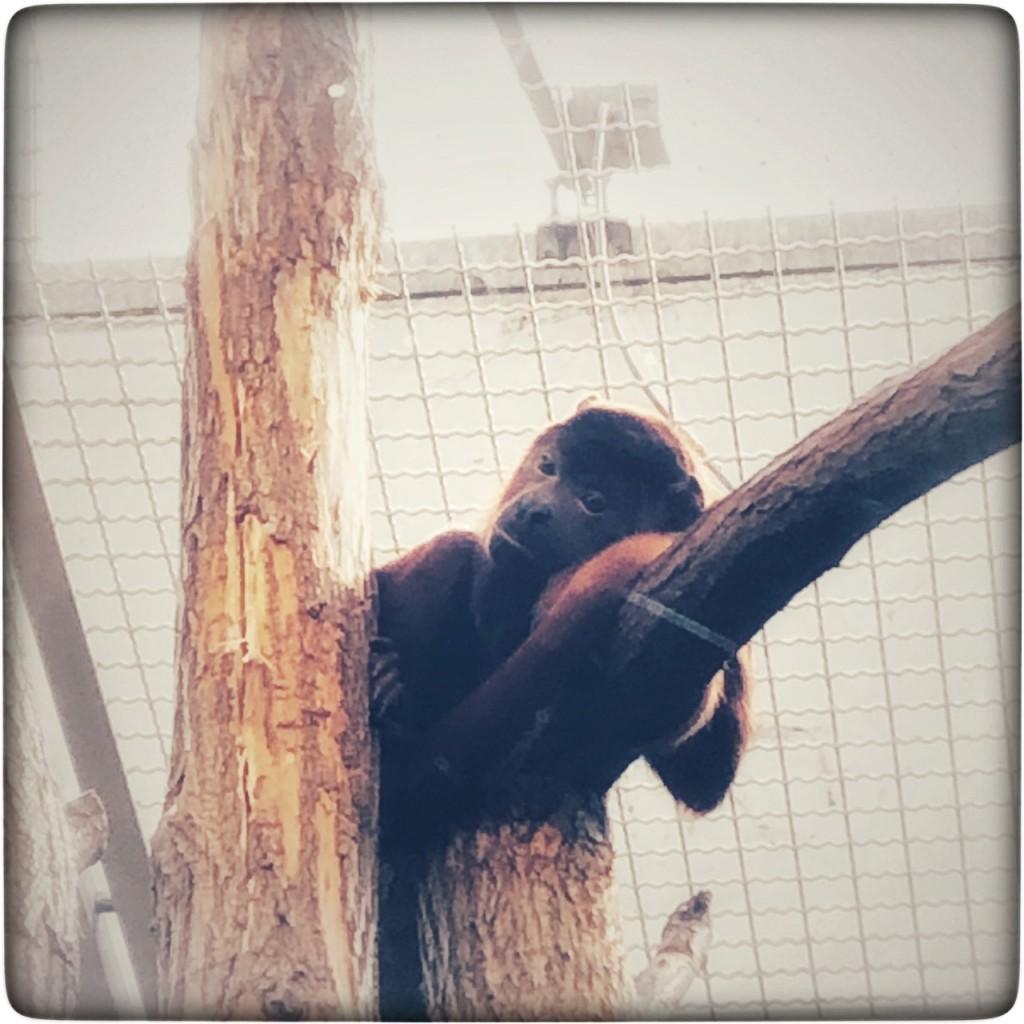 Ja, ich weiß, ist kein Gorilla, aber sonst reimt es sich ja nicht ...